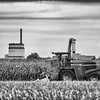 LeBlanc-Corn Silage-6229-Edit