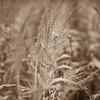 LeBlanc-Corn Silage-6096-2