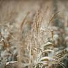 LeBlanc-Corn Silage-6095