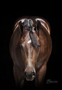 Leier Performance Horses