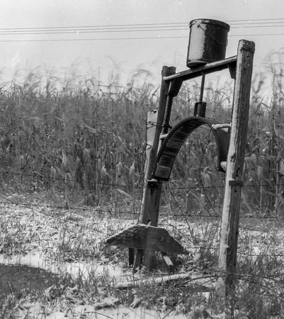 Cattle Oiler in grandpas feed lot