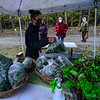 KRISTOPHER RADDER — BRATTLEBORO REFORMER<br /> Emily Amanna, of Wild Shepard Farm, grabs a bag of greens mix for a customer at the Brattleboro Area Farmers' Market, in Brattleboro, Vt., as the market opens for the first time on Saturday, May 9, 2020, since the COVID-19 pandemic.