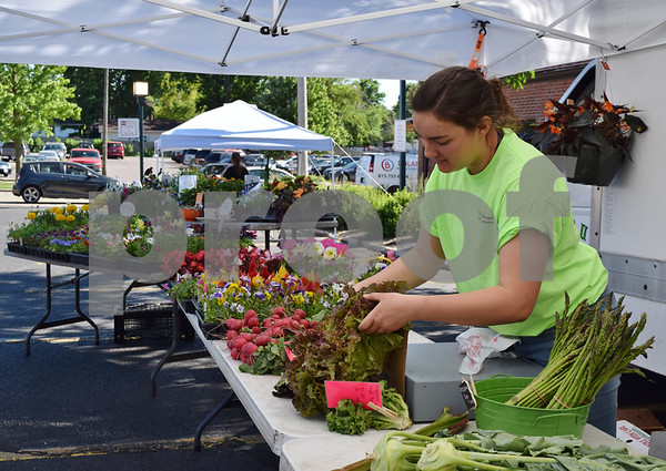 Amanda Scarpitti, a seller with Theis Farm Market, prepares curly red lettuce for sale during the Sycamore Farmers Market on June 6. The Sycamore Farmers Market features an average of 15 to 17 vendors, including four farms, coffee, soap and baked goods.