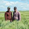 Farmers inspect durum field in Saskatchewan