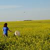 Farmer uses sweep net in canola field