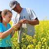 A farmer shows how to check his canola crop as it blooms.  Saskatchewan is the world's largest producer of canola and is the world centre for canola research and development.  In 2015, Saskatchewan's 26,000 registered canola growers produced 51 percent of Canada's canola.
