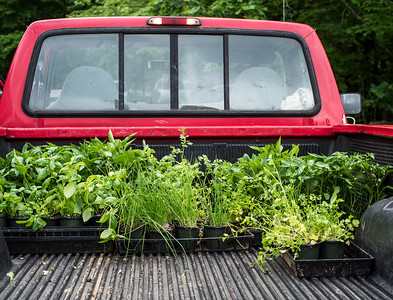 Pickup Truck with plants