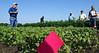 Canada-Manitoba Crop Development Centre, Carberry, field tour.