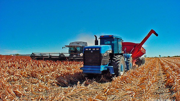 Harvest near Gindi in Central Queensland
