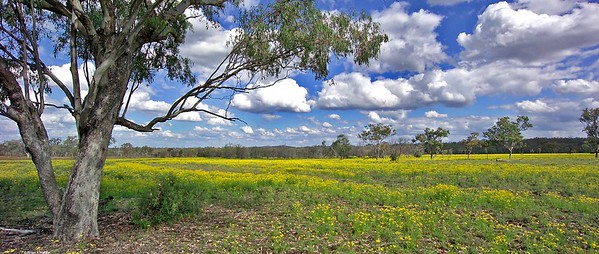A field (paddock) on the right along the road to Springsure.