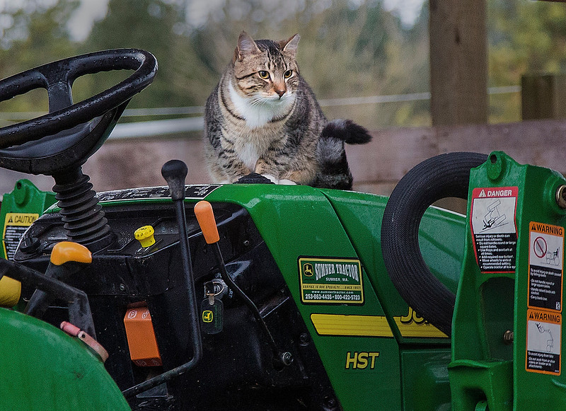 Barn Cat and Tractor