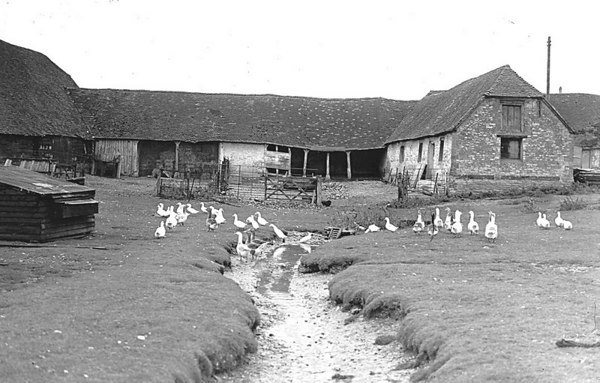 <center><font size=3><u> - Farmyard with Geese - </u></font> (BS0378)  Geese in Crowmarsh Battle Farmyard beside the stream. </center>