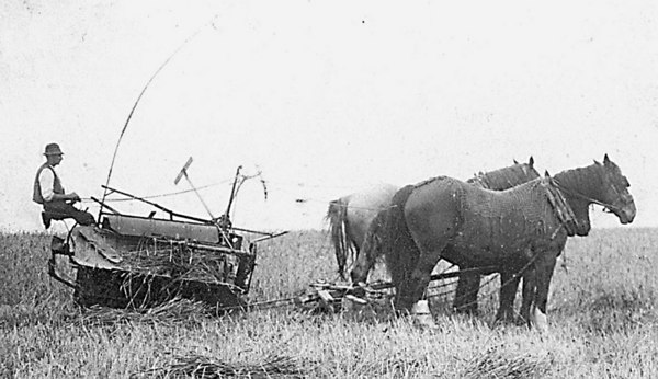 <center><font size=3><u> -  Binder at work at Crowmarsh Battle Farm- </u></font> (BS0334)  Horse drawn binder working in field in 1940.     </center>