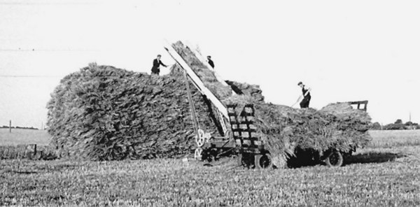 <center><font size=3><u> - Stacking stooks on Rick - </u></font> (BS0377)  Crowmarsh Battle Farm in WWII. The Chamberlain Crop-Collector in use here was invented by Walter Chamberlain (son of F.J. Chamberlain). </center>