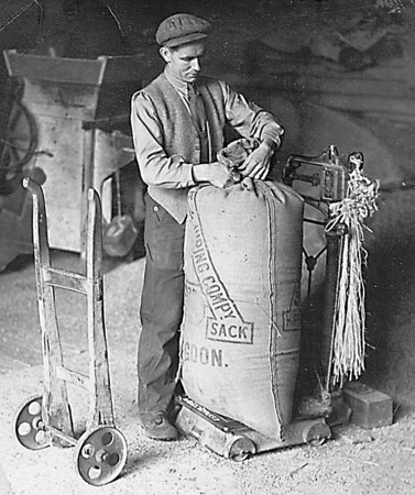 <center><font size=3><u> - Bagging Barley - </u></font> (BS0370)  RG(Bob) Bennett, a tractor driver on Crowmarsh Battle Farm, bagging barley</center>