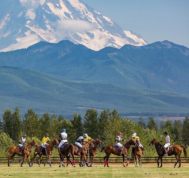 Polo and Mount Rainier