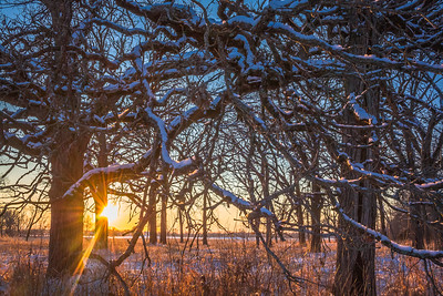 Winter sunset in the Wisconsin Savanna