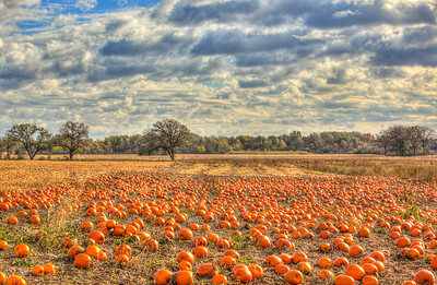 Pumpkin Field before the Storm  10/20/18