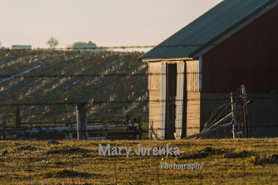 Farm in Marshall County, Iowa