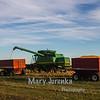 Harvesting Corn in Story County