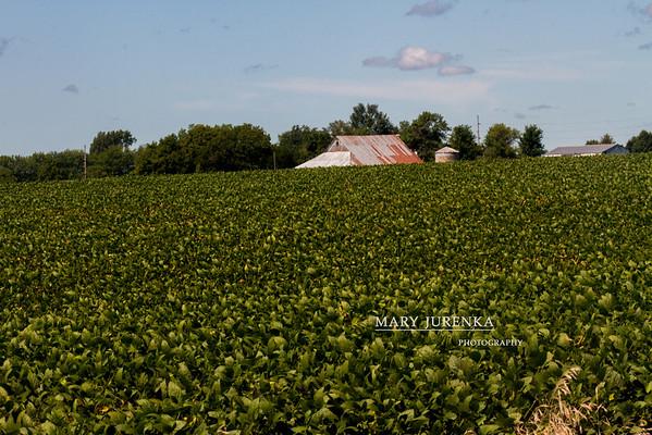 Historic Barns in Story County, Iowa
