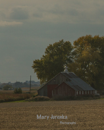 Webster County Farm