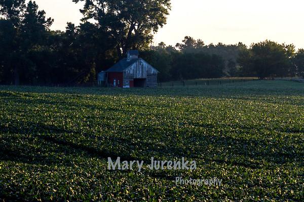 Story County Sunrise