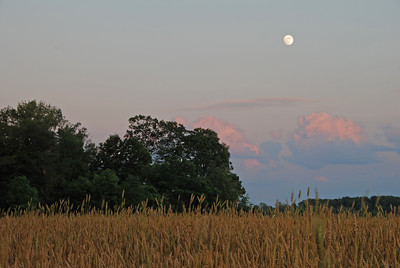 Moon Over a Wheatfield