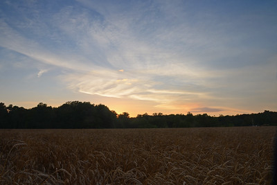 Sunset Over a Wheatfield