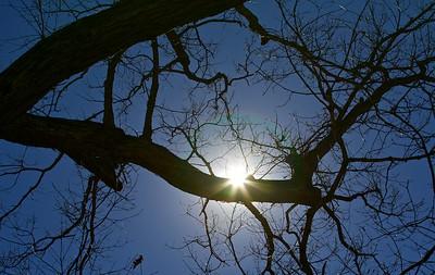 "A perfect ""Carolina Blue"" sky day."