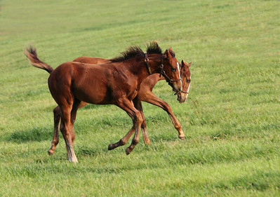 Two Thoroughbreds Playing
