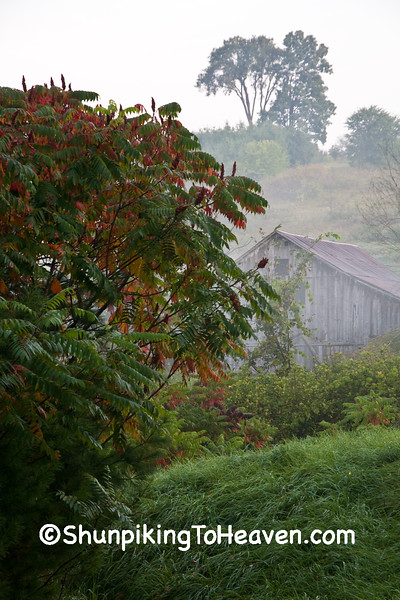 Foggy Farm Scene with Sumac, Richland County, Wisconsin