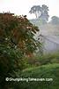 Foggy Farm Scene with Sumac, Richland County, Wisconsin