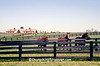 Horse Farm, Woodford County, Kentucky