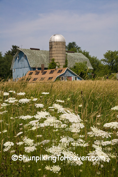 Summer Farm Scene with Queen Anne's Lace, Columbia County, Wisconsin