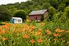 Farm Scene with Daylilies, Dane County, Wisconsin