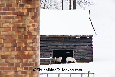 Tile Silo and Log Shed with Sheep, Sauk County, Wisconsin