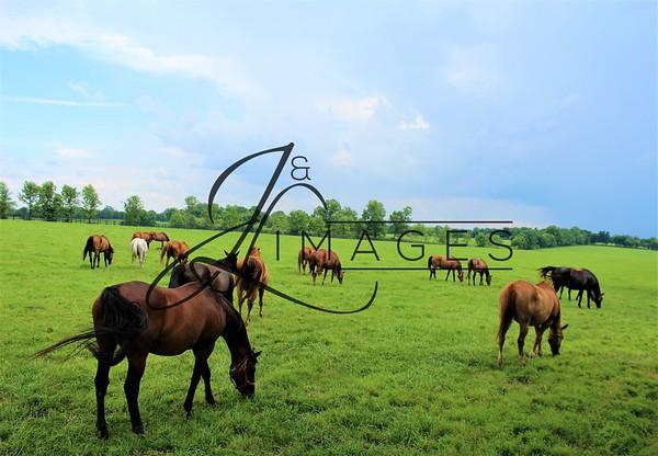 Mereworth Farm