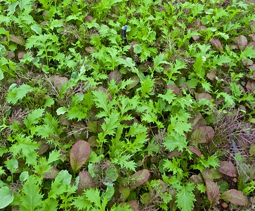 Salad mix  of assorted baby greens- just add your favorite dressing.
