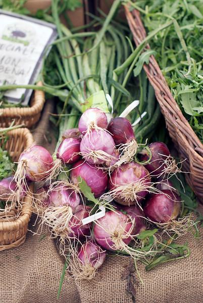 purple onion chives