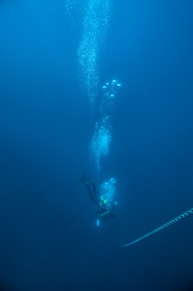 Phil descending in blue water