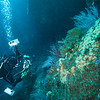 Phil on a patch of Given's zoanthids, Epizoanthus giveni<br /> <br /> Farnsworth Bank, Catalina Island, California