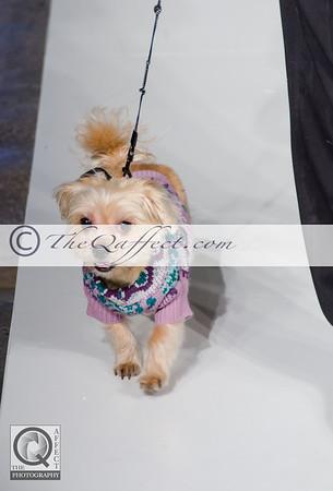 FWB_FW2014_My Fabulous Puppy-7357