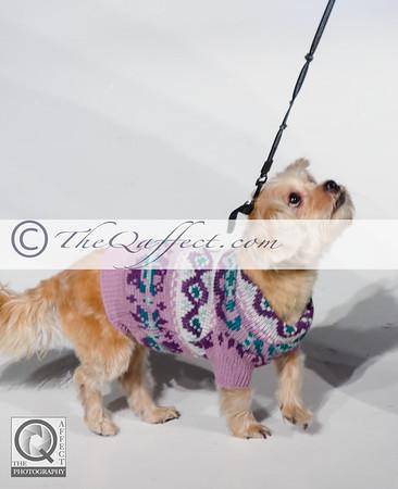 FWB_FW2014_My Fabulous Puppy-7359