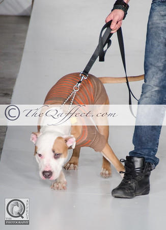 FWB_FW2014_My Fabulous Puppy-7339