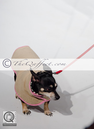 FWB_FW2014_My Fabulous Puppy-7381