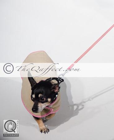 FWB_FW2014_My Fabulous Puppy-7380