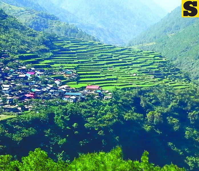 The Bayyo Rice Terraces in Bontoc, Mountain Province. (Photo by Noel Villaflor of Sun.Star Cebu)
