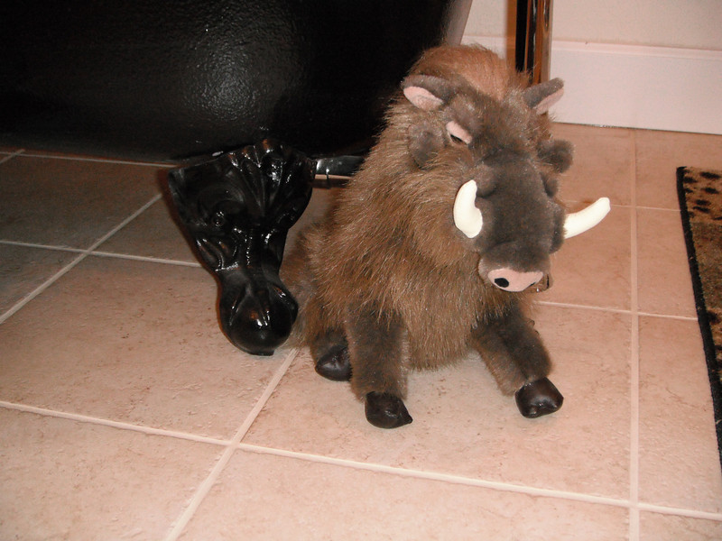 """My """"Pumba"""" was a gift from my roommate on my first safari (Kenya)."""