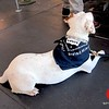 Photo by Lily Ko<br /> <br /> In This Scene:  The Levi's Workshops pup! How cute is he in this little Levi's workwear bandana!